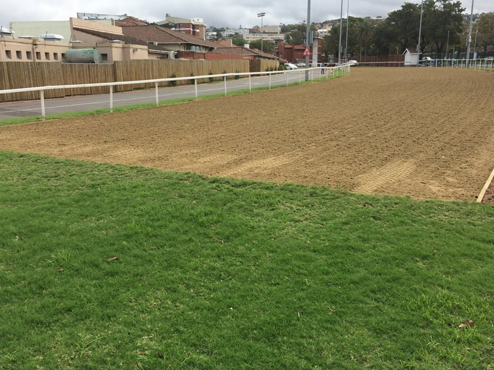 POLY GRASS GREYVILLE