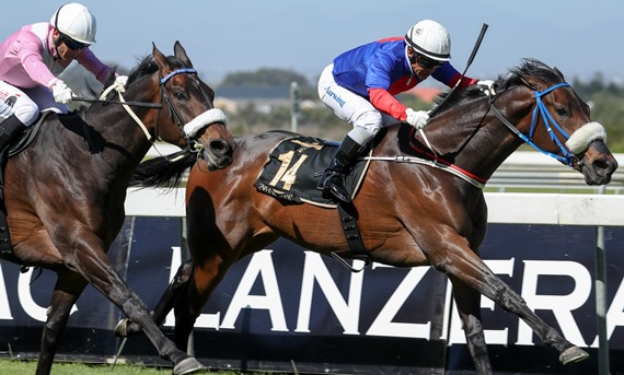 Safe Harbour wins Lanzerac Ready To Run Cup